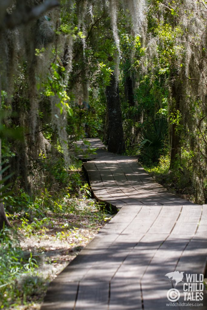 Spring is the perfect time to get lost in the serenity of this lush park. - Jean Lafitte National Park, Barataria Preserve  - Marsh Overlook Trail, outside New Orleans, LA